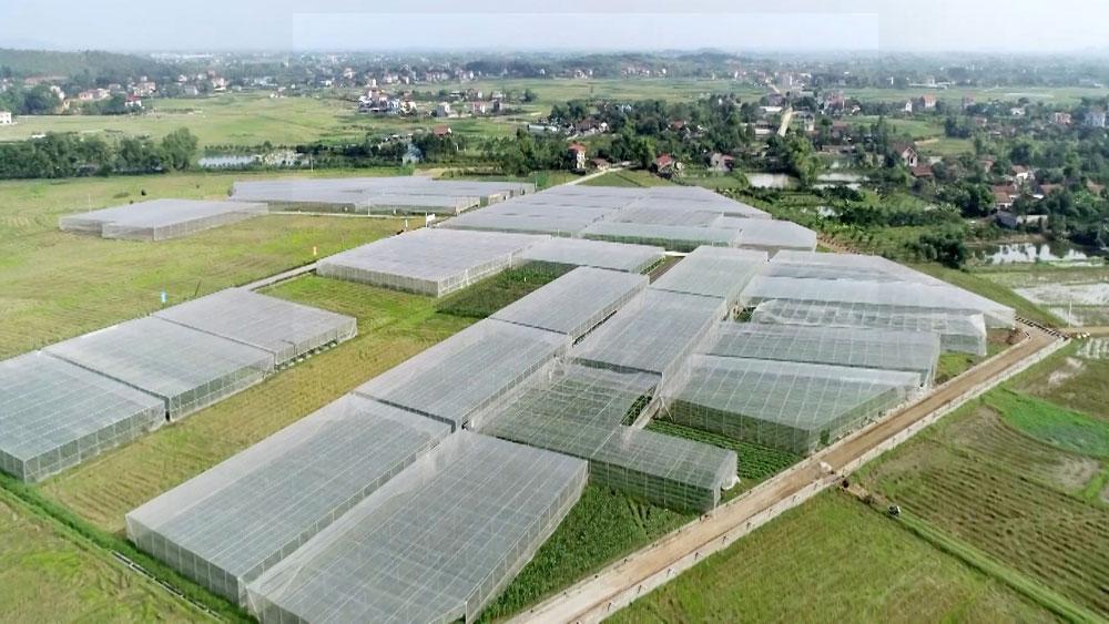 Việt Yên chú trọng phát triển nông sản chủ lực