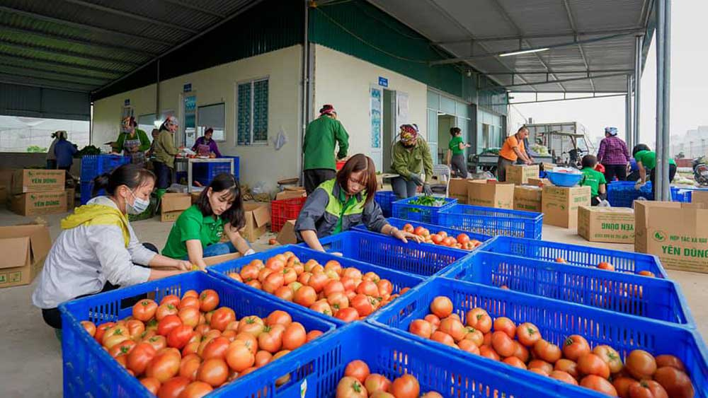 Local cooperative signs contract to supply agricultural products for BigC supermarket chain