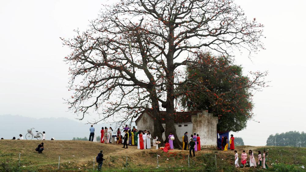 Bảo đảm an ninh trật tự, cảnh quan khu vực cây gạo Lãng Sơn (Yên Dũng)