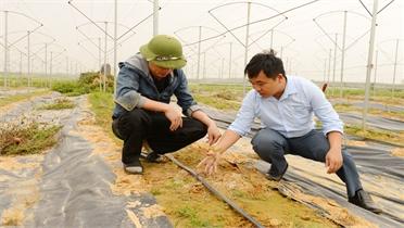 """Một số hộ ở Bắc Giang trồng đặc sản, nhận """"trái đắng"""""""