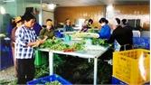 Huyện ủy Yên Dũng nỗ lực đưa nghị quyết đại hội đảng vào cuộc sống