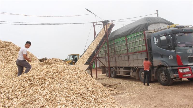 Sơn Động chú trọng phát triển công nghiệp chế biến gỗ