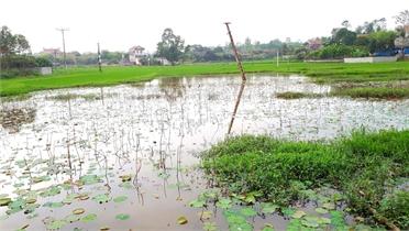 Thị trấn Phồn Xương xây dựng khu dân cư mới gây úng ngập đất nông nghiệp