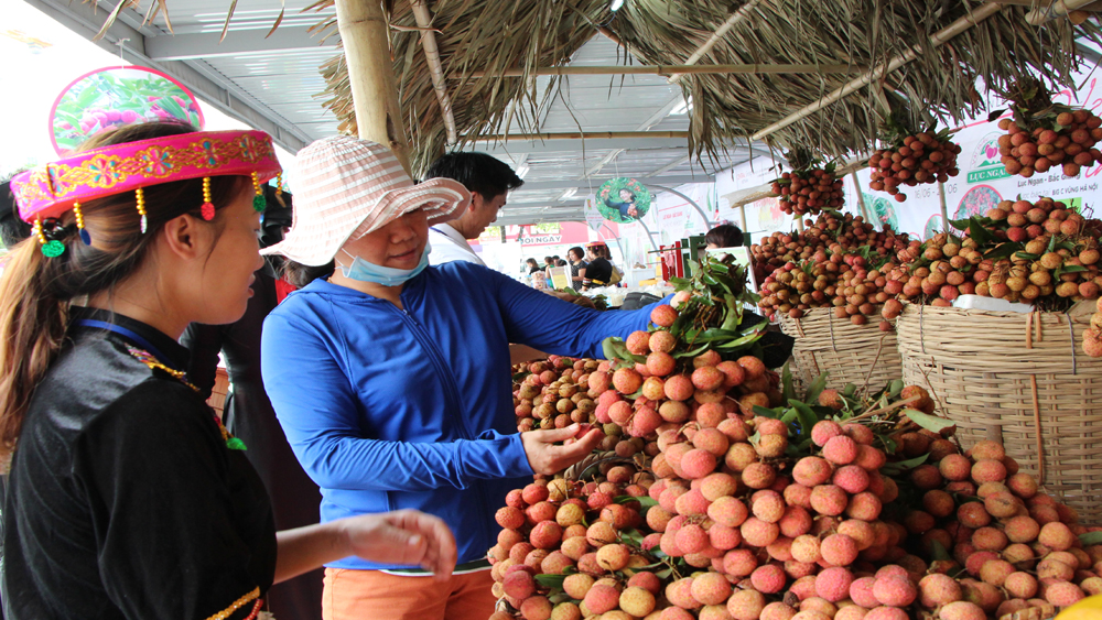 Nearly 2 billion VND spent to support lychee consumption