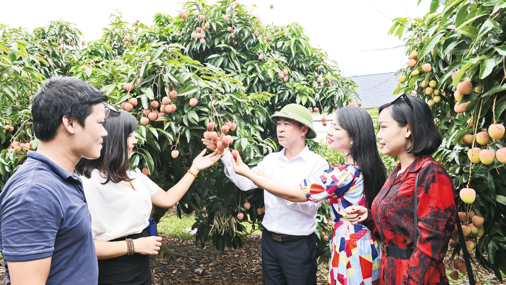 Luc Ngan lychee and the story of GI protection in Japan