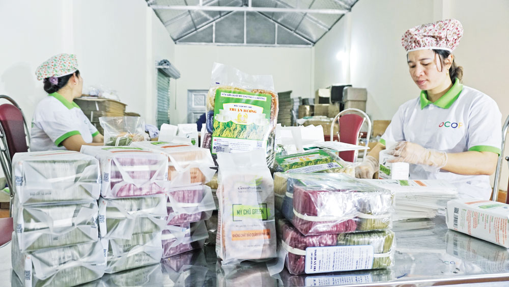 Exported quantity, Chu rice noodle, Bac Giang province, product value, various foreign markets, noodle productivity and quality