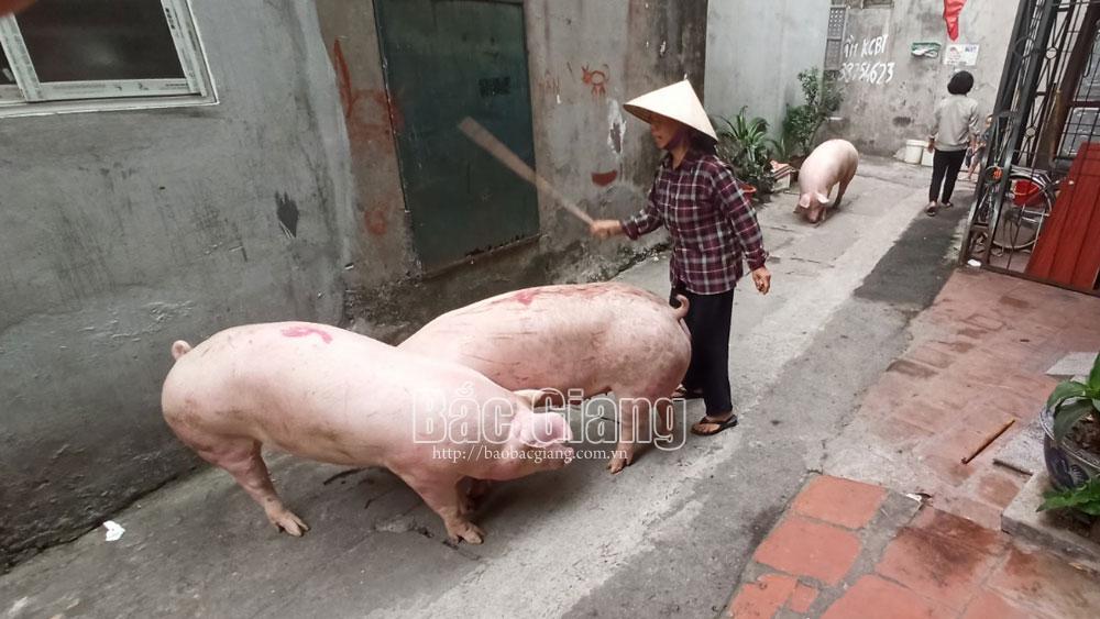 TP Bắc Giang: Dân bức xúc vì lò mổ trái phép tái diễn gây ô nhiễm môi trường