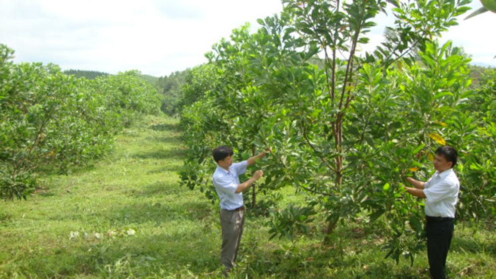 Lựa chọn giống mới, nâng chất lượng rừng trồng
