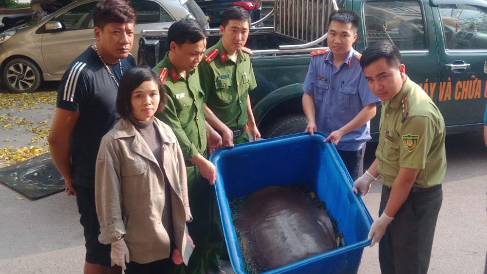 Bắc Giang: Bắt giữ, giải cứu một cá thể giải khổng lồ
