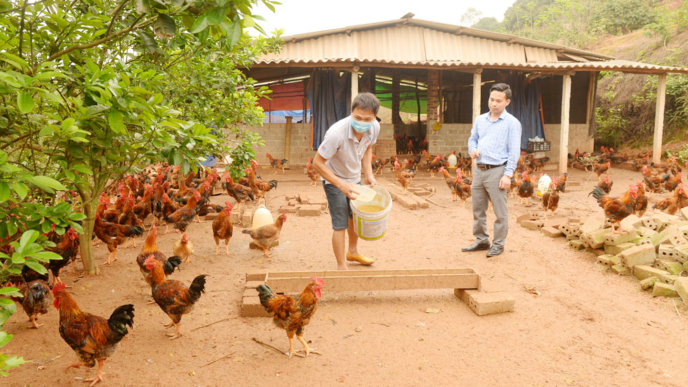 Linkage in animal husbandry eases consumption with stable price