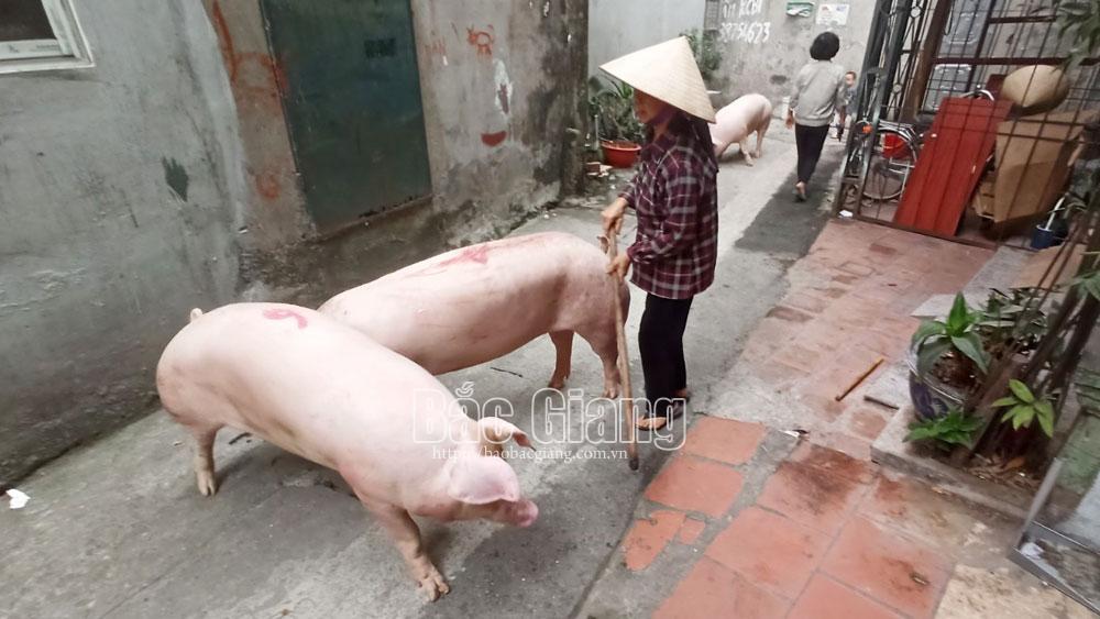 thành phố bắc giang, phường hoàng văn thụ, lò mổ, giết mổ lợn
