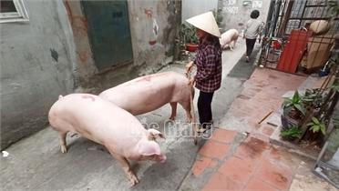 Lò mổ trái phép ở TP Bắc Giang: Chính quyền vẫn chưa xử lý