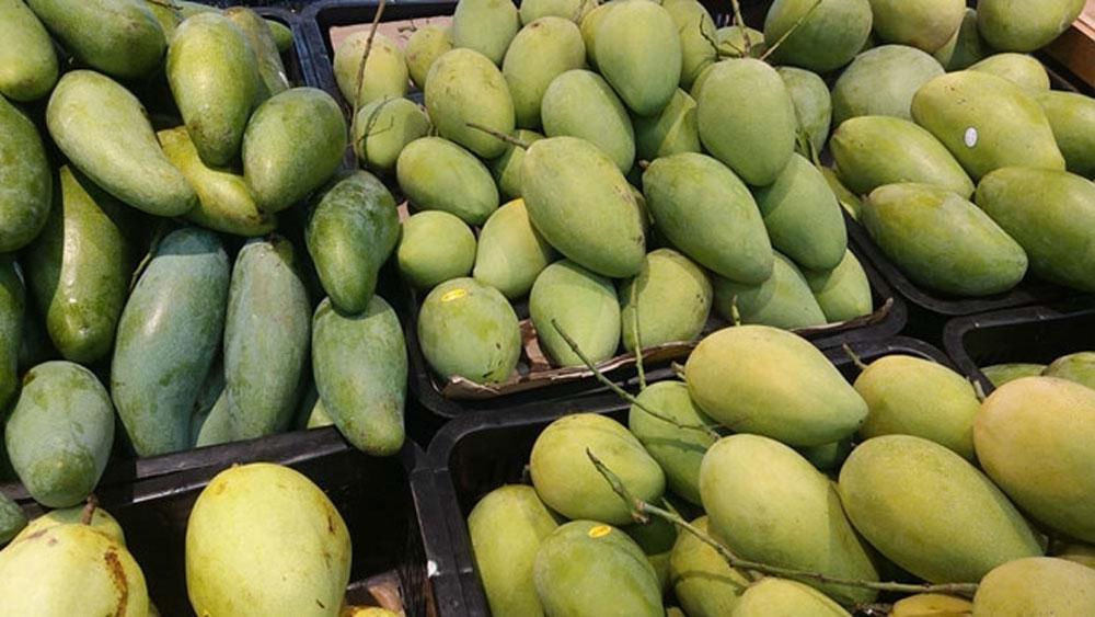 Vietnam is world's 13th largest mango producer
