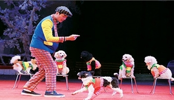 More than 100 circus artists to compete at national competition