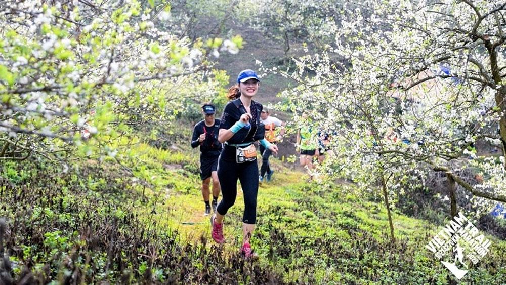 4,300 runners, Vietnam Trail Marathon, Son La province, domestic and foreign runners, peach and plum gardens, green tea fields