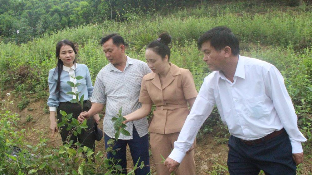 Lãnh đạo Ban Dân tộc, Liên minh HTX tỉnh khảo sát tình hình sản xuất tại HTX Ba kích tím Tây Yên Tử.