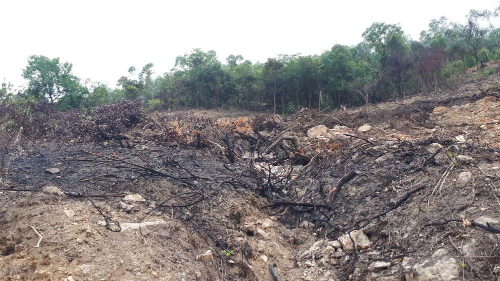 phá rừng, Bình Sơn, Nghè Mản, Bắc Giang