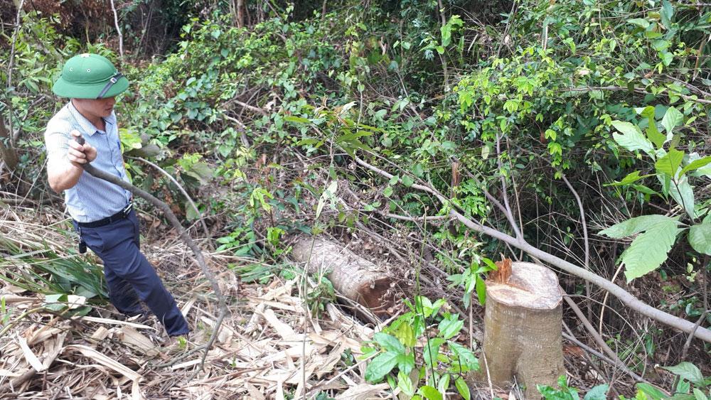 Một hộ dân xã Bình Sơn (Lục Nam) nhiều lần phá rừng: Xác định rõ diện tích thiệt hại, xử lý nghiêm vi phạm