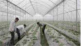 Tân Yên ứng dụng công nghệ cao vào sản xuất nông nghiệp: Gỡ nút thắt đất đai để tăng hiệu quả