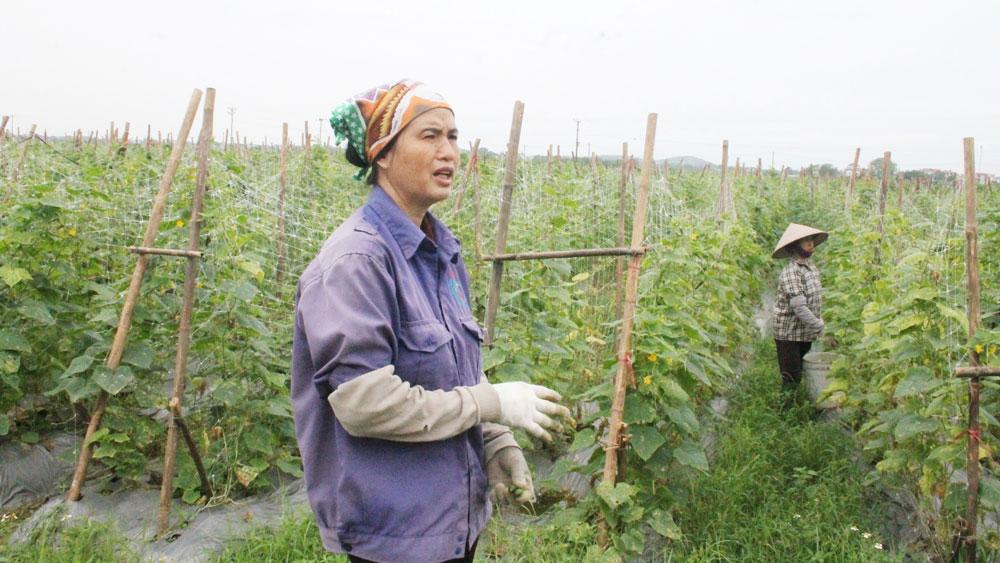 Tân Yên, Bắc Giang, công nghệ cao, sản xuất nông nghiệp, đất đai