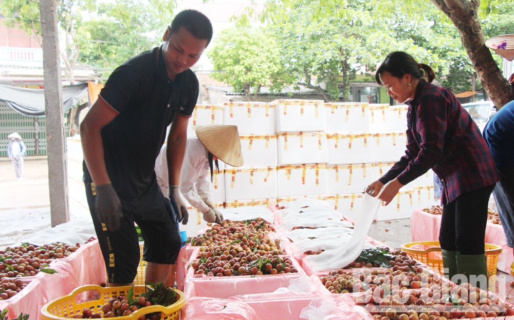 300 lychee packing facilities meet condition to export to Chinese market