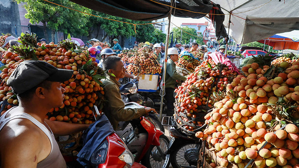 Vietnamese lychee to be sold online for first time