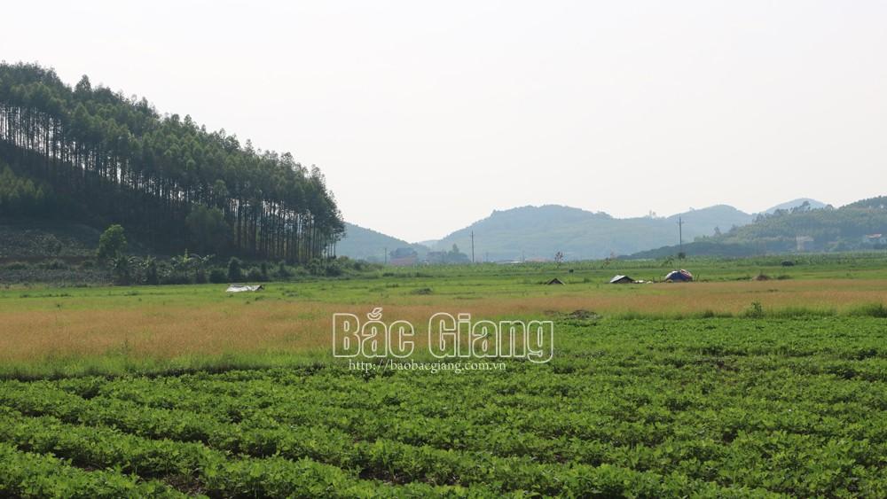 Xã Tam Dị, Lục Nam, Lại đặt mộ, ở xứ đồng, Bèo Trôi, người dân, lo lắng, Bắc Giang, môi trường