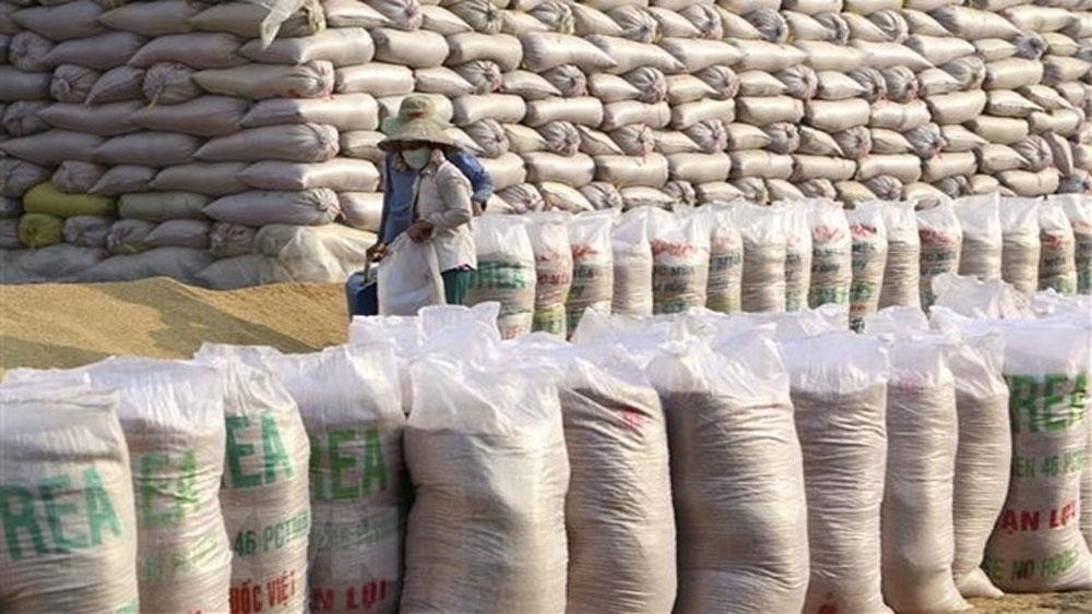 Vietnam, second largest rice exporter, US department, estimated export volume, Vietnam Food Association