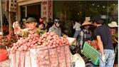 Lục Ngạn: Hỗ trợ lao động, thương nhân phòng dịch khi thu mua, tiêu thụ vải thiều