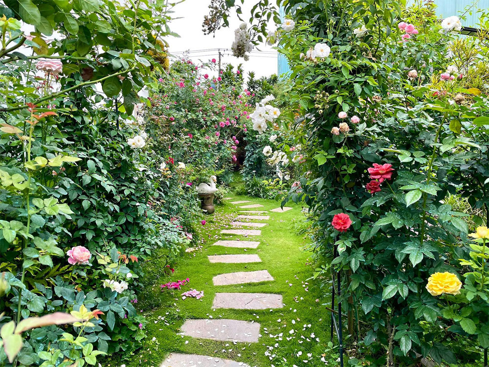Businesswoman, Ngoc Suong, cultivates rose garden, nearly 500 spices,  scent of roses, flower garden, mystical paradise