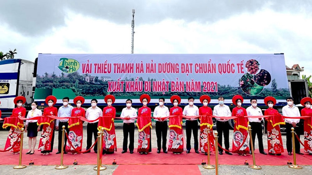 Hai Duong province, promotes consumption, Thanh Ha lychee, specialty agricultural products, foreign importers, important trade promotion