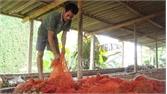 Lục Ngạn: Hơn 2,4 tỷ đồng hỗ trợ xây dựng lò sấy vải thiều