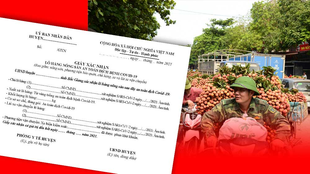 Bac Giang grants certificate of Covid-19 free lychee