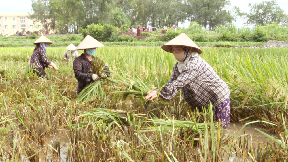 Nghĩa tình mùa gặt, Tân Yên