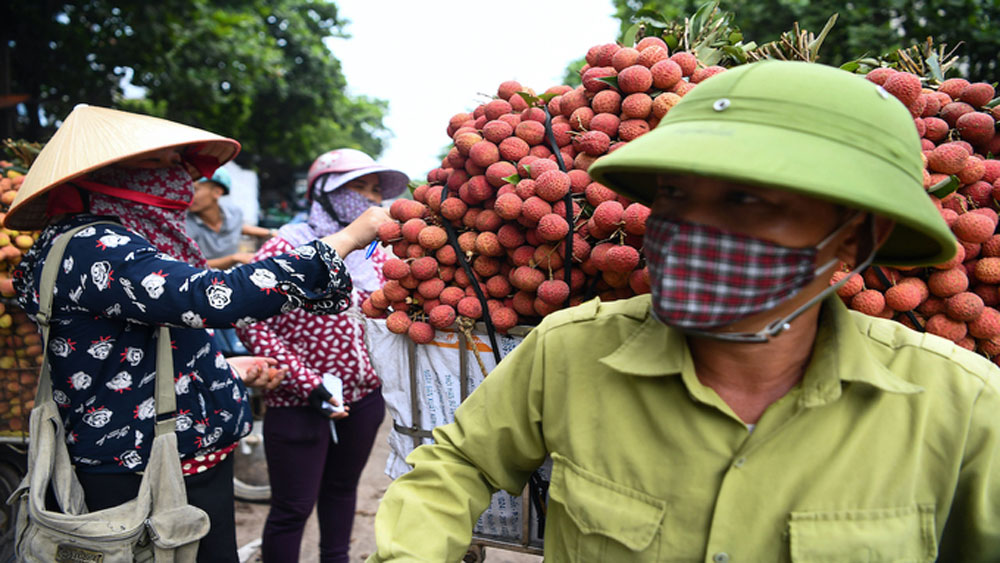 Lychee farmers learn the ropes of online trading