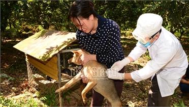 Bắc Giang: Bảo đảm 100% đàn chó, mèo được tiêm phòng vắc-xin dại