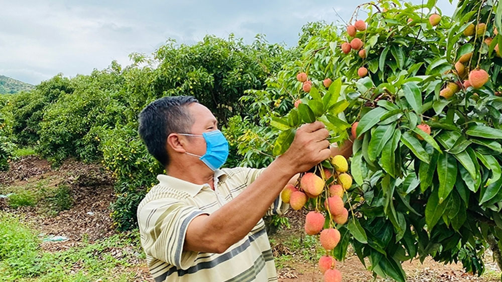 PM orders removing difficulties in farm produce sale for Bac Giang