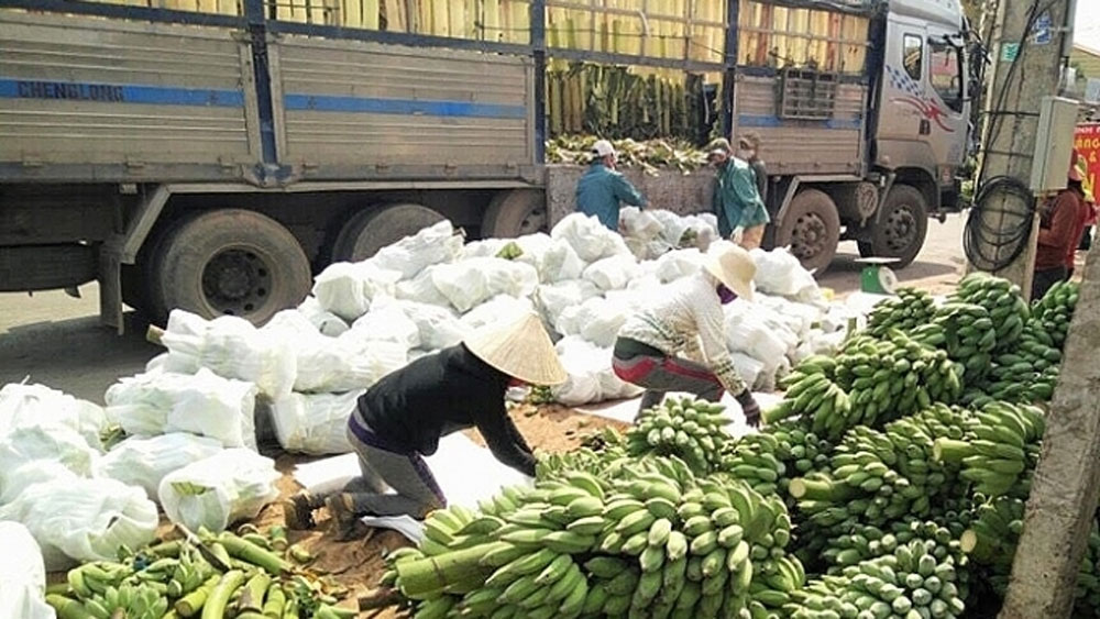 Vietnam, China to speed up customs clearance for fresh fruits