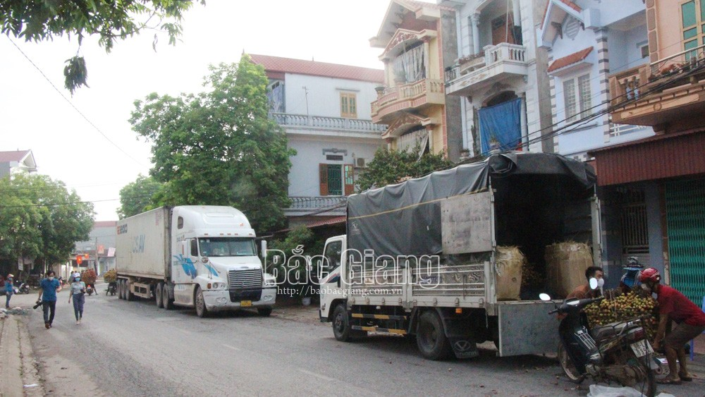Bac Giang daily exports 1,000 tonnes of early ripening lychee to China