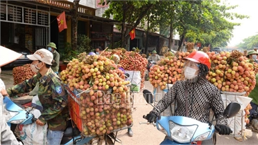 Bắc Giang: Hàng phụ trợ phục vụ tiêu thụ vải thiều tăng giá