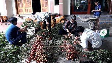 Lạng Giang: Khuyến khích người dân xây lò sấy vải thiều