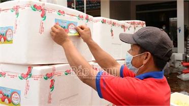 Lục Ngạn: Mỗi ngày xuất gần 150 tấn vải thiều sang Campuchia