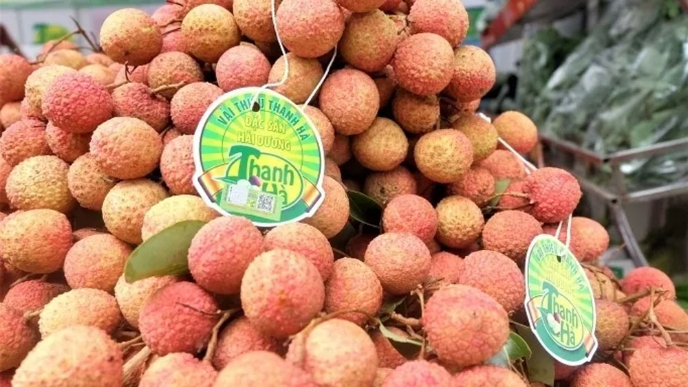 Hai Duong lychee exported to Thailand for first time