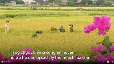 Công an Yên Dũng gặt lúa giúp dân ở tâm dịch