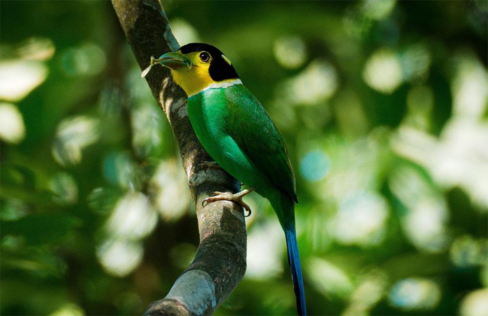 Kingdom of birds, Bach Ma mountain peak, Thua Thien - Hue Province, famed trekking destination, Bach Ma National Park