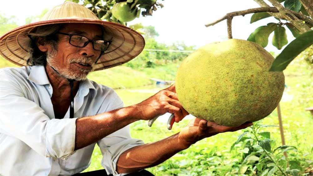 """Lão nông """"bắt"""" cây ra quả trên đất cằn, thu hàng trăm triệu đồng mỗi năm"""