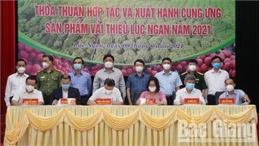 Tập đoàn TKV cam kết tiêu thụ ít nhất 180 tấn vải thiều Lục Ngạn