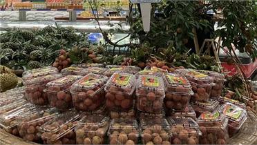 Xuất khẩu gần 11 nghìn tấn vải thiều Bắc Giang qua cửa khẩu tỉnh Lào Cai