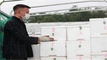 Đảng ủy khối Cơ quan và DN Yên Bái tiêu thụ 76 tấn vải thiều Bắc Giang