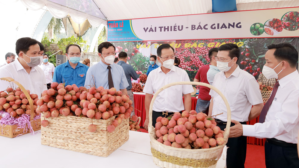 Lào Cai, Tuần lễ giao thương, xúc tiến tiêu thụ nông sản, xúc tiến tiêu thụ vải thiều, nông sản đặc hữu